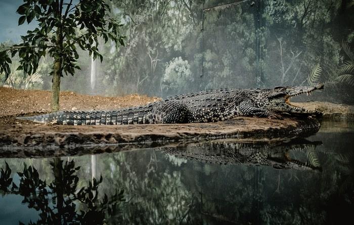 Khu vực sinh sống của cá sấu sông nin