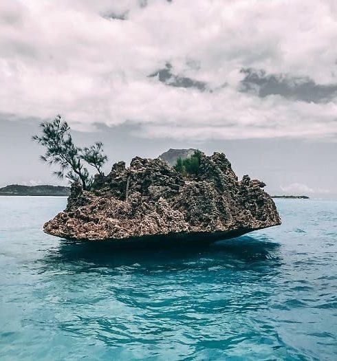 Động Vật Ấn Độ Dương