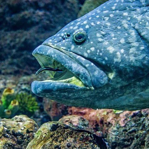 cá chình