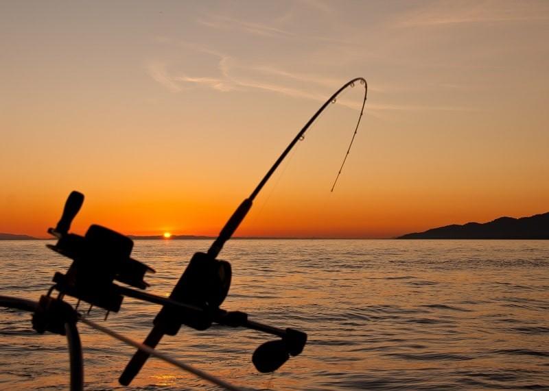 câu cá đêm