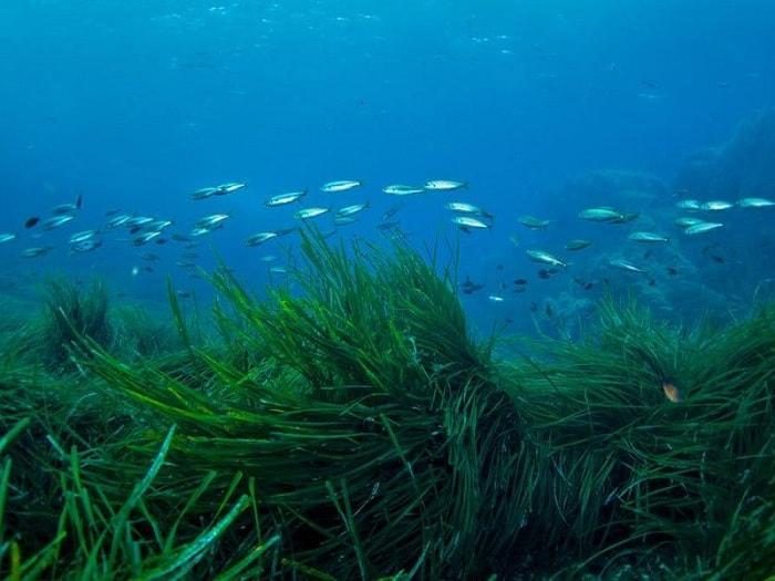 Hệ Sinh Thái Thảm Cỏ Biển Có Những Gì