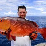 mồi câu cá hồng biển
