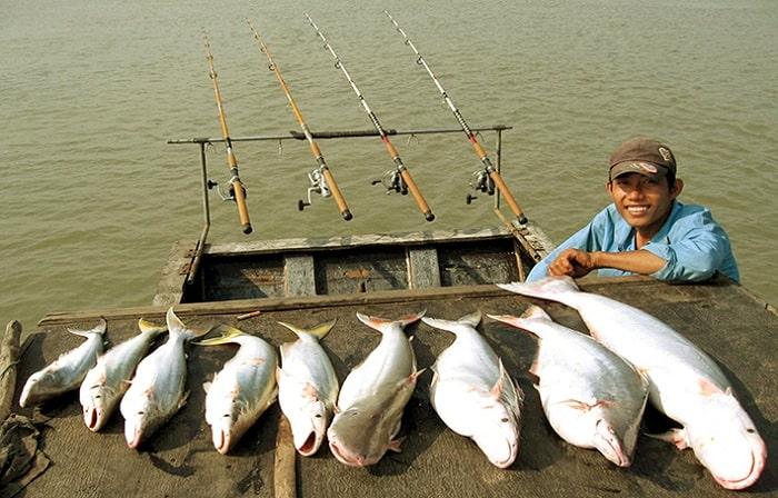 Môi Trường Sống Cá Bông Lau