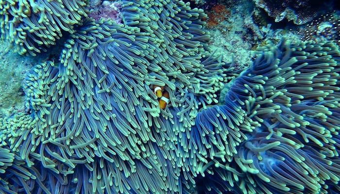 San hô phát triển như thế nào?