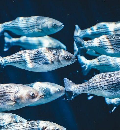 tên các loài cá bằng tiếng anh